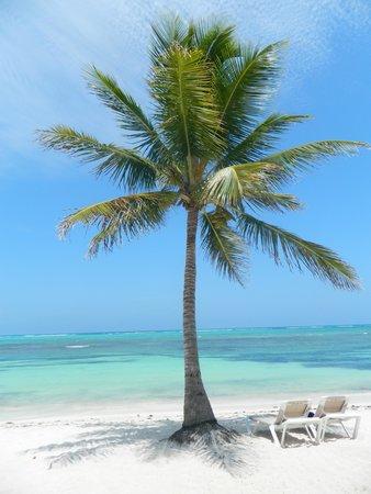 PavoReal Beach Resort Tulum: Una cartolina!!