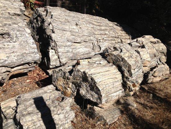 Petrified Forest: Fossilised redwood