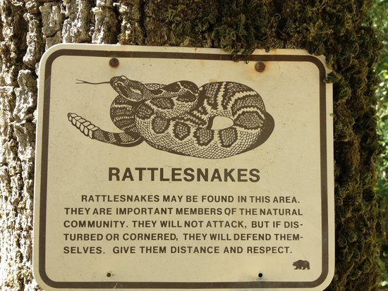 Petrified Forest: Rattlesnakes - you have been warned!
