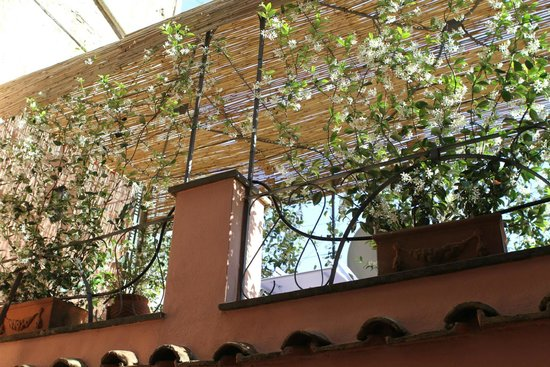 The Inn At The Roman Forum - Small Luxury Hotel: looking up to the patio