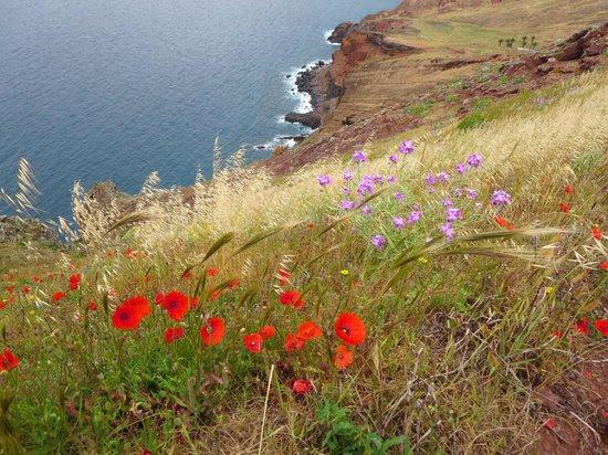 Ponta de Sao Lourenco: Wild Flowers