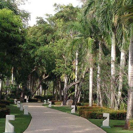 Paradisus Punta Cana Resort: Path through mangrove