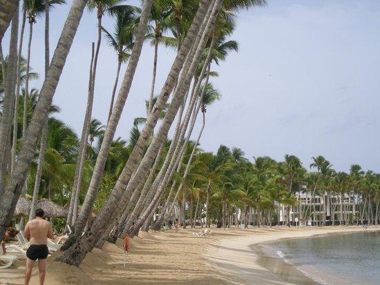 Grand Bahia Principe La Romana : Leaning Palms