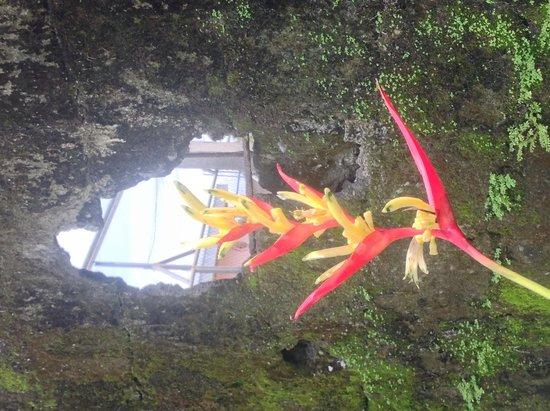 Hotel Inn Jimenez : Flower