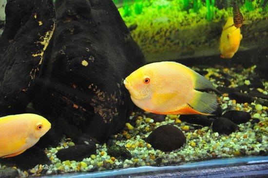 Barbados Wildlife Reserve: Fish