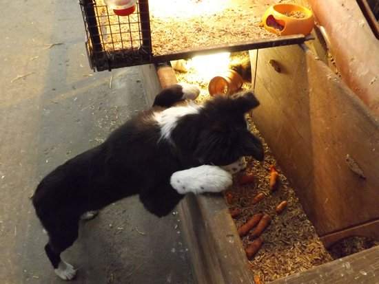 Streamvale Open Dairy Farm: The owners dog loved all the animals too