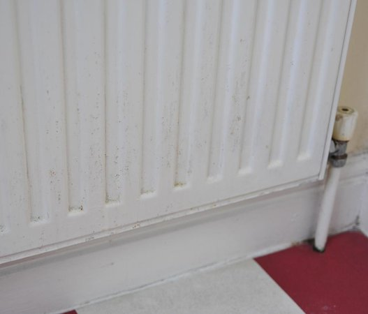 Apple House Guest Accommodation: filthy radiator in bathroom