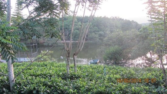 Lake Serenity Boutique Hotel : tea garden by the lake