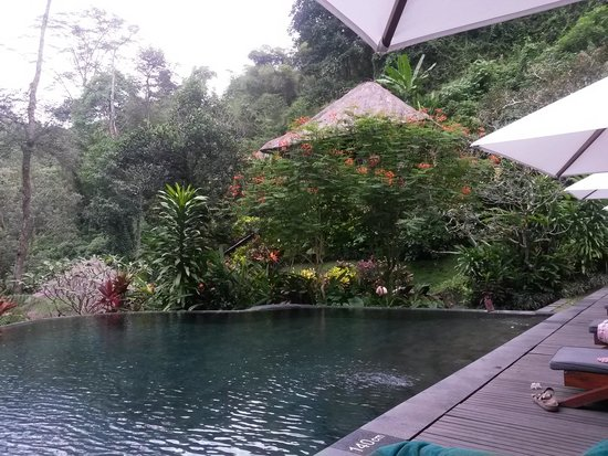 Maya Ubud Resort & Spa: бассейн
