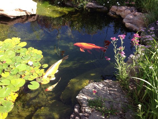 Ravens Ridge: Friendly Koi!