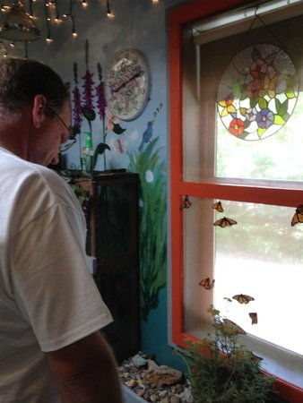 Bear Mountain Butterfly Sanctuary: Jim looking at the monarchs