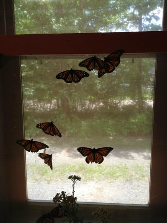 Bear Mountain Butterfly Sanctuary: Monarchs at the window