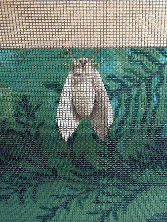 Bear Mountain Butterfly Sanctuary: Moth