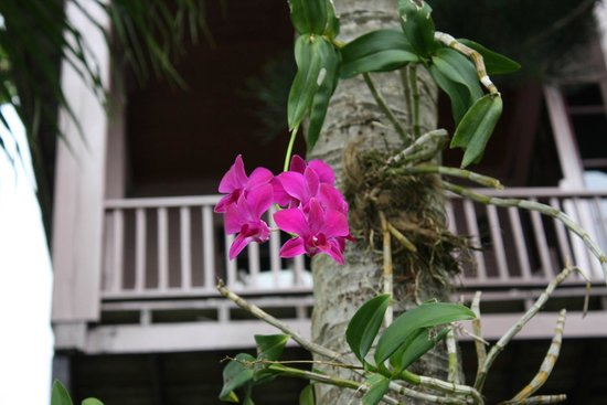 Royal Crown Hotel & Palm Spa Resort: Orchid