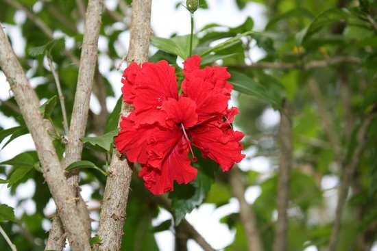 Royal Crown Hotel & Palm Spa Resort: Flower