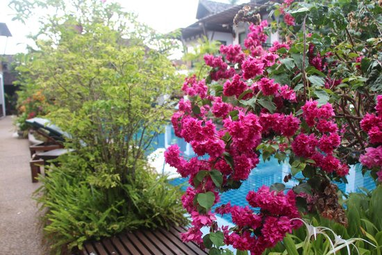 Railay Village Resort : beautiful flowers