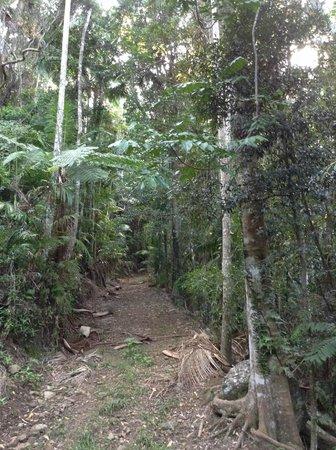 Tailwaggers Rainforest Retreat: Beautiful rainforest walks
