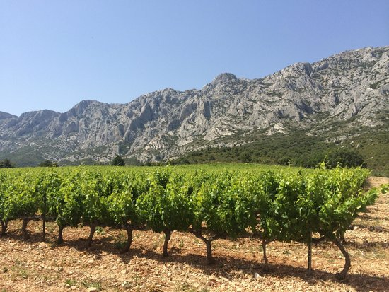Provence Wine Tours : Gorgeous Sainte-Victoire mountains that Cezanne loved to paint behind this gorgeous vineyard