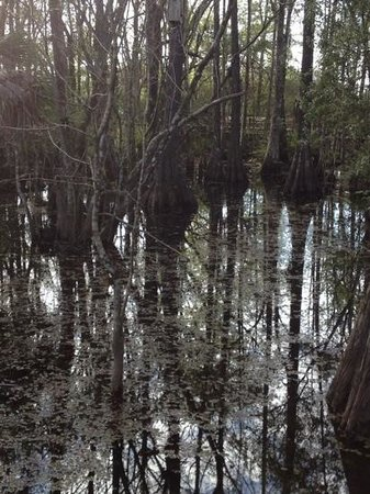 Six Mile Cypress Slough Preserve: swamp