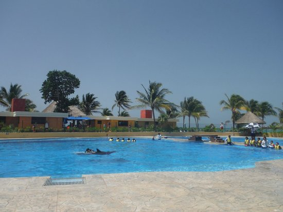 Barcelo Maya Palace: Expensive Dolphins