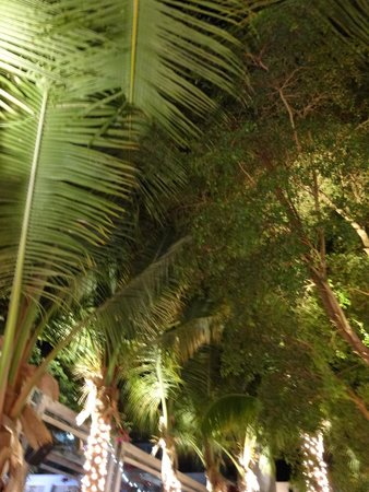 Stelle : romantic atmosphere outside under the palms