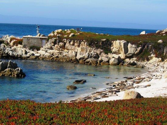 Monterey Peninsula Recreational Trail: Sea Lions