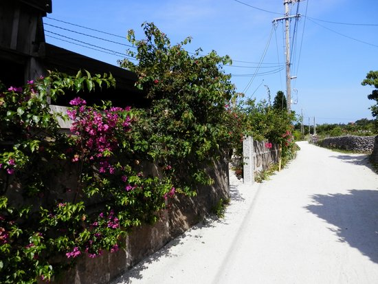 Minshuku Noharaso : のはら荘前の道