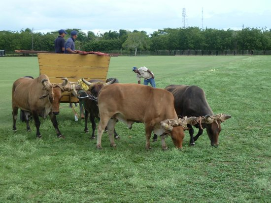 Casa de Campo Re : sights on the polo fields while horseback riding