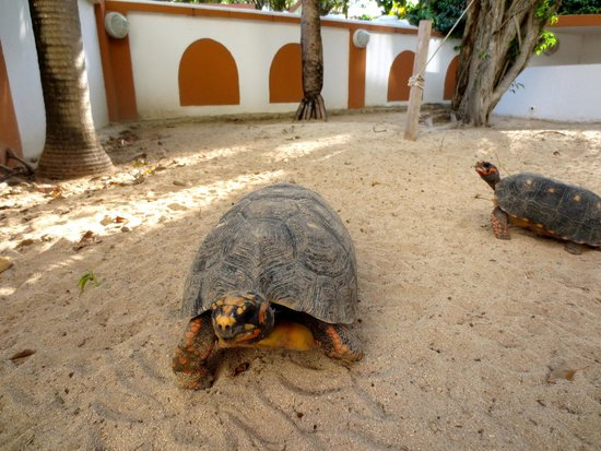 Turtle's Nest Beach Resort: The Turtle's Nest