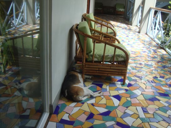 Hotel Plaza Yara: Resident pooch's favourite sleeping position