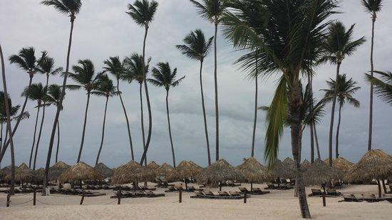 Paradisus Palma Real Golf & Spa Resort: Big palms!
