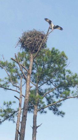 Jolee Island Nature Park: Largest nest we've ever seen!