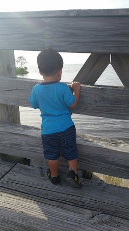 Jolee Island Nature Park: View of the water from the bridge...
