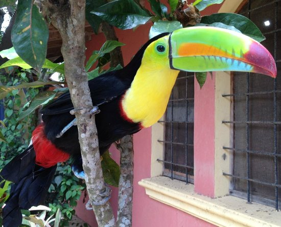 Tranquility Bay Beach Retreat: Our friendly Toucan named Chester