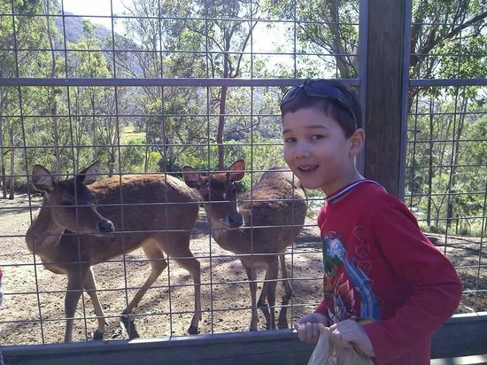 Lyell Deer Sanctuary: deer feeding