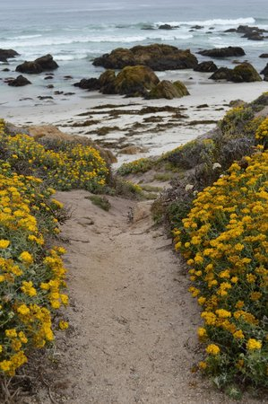 Asilomar Conference Grounds: Beach scene