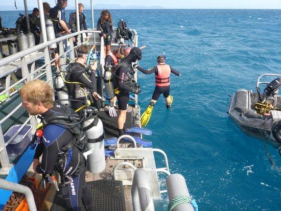 Cairns Dive Centre: A snorkeller enters the water
