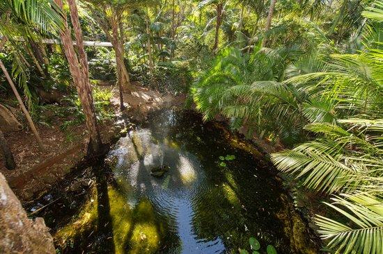 Pethers Rainforest Retreat: Bird's eye view