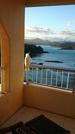 Reef View Hotel: Burung bersantai di balkon