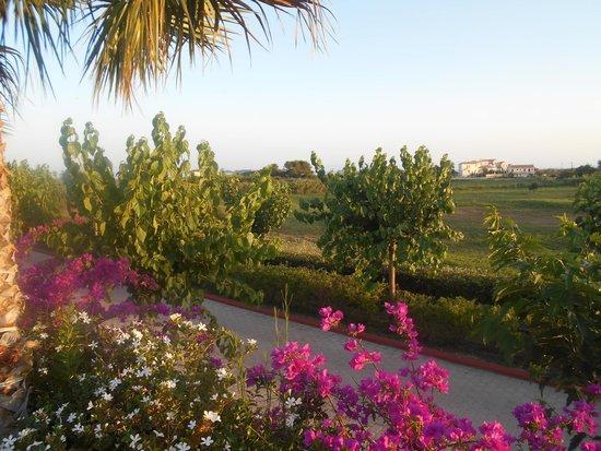 Apollonion Resort & Spa Hotel: Fields around the hotel