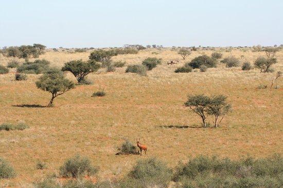 Tswalu Kalahari Reserve: The Kalahari