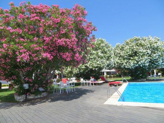 Skiathos Palace Hotel: Pool and breakfast area