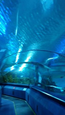 Aquaria KLCC : tunnel