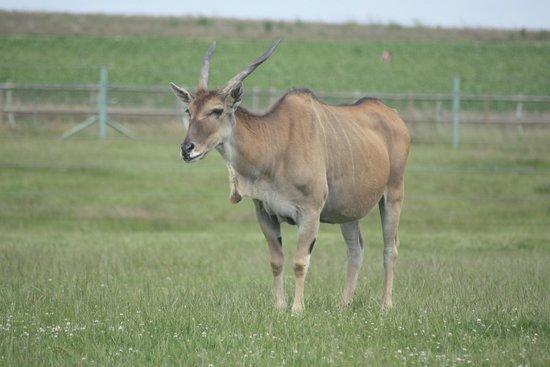 Woburn Safari Park: the african plain