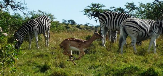 Mpongo Park Game Private Reserve: Great to see a variety of Free roaming animals together!