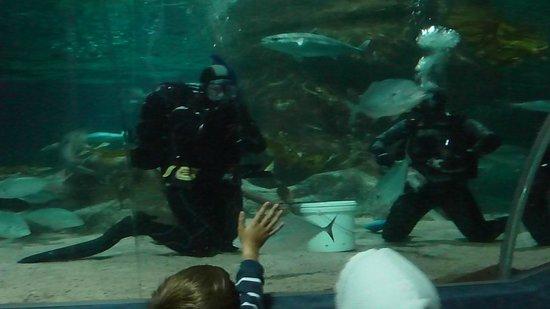 SCUBA with sharks @ National Aquarium
