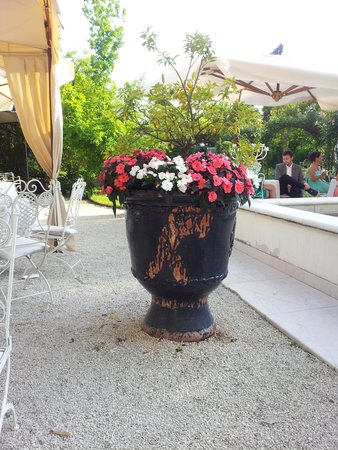 Villa Foscarini Cornaro: piante