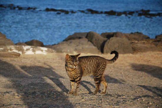 HD Beach Resort: Molo przy plaży roi się od kotów