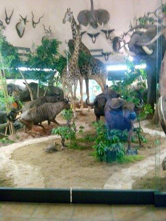 Hotel Louty Simba: Hotel Simba,museo