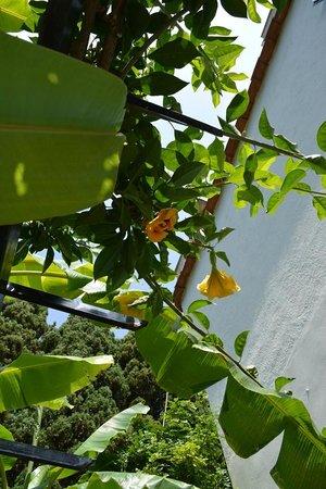 Hotel Continental Ischia: giardino fuori la camera